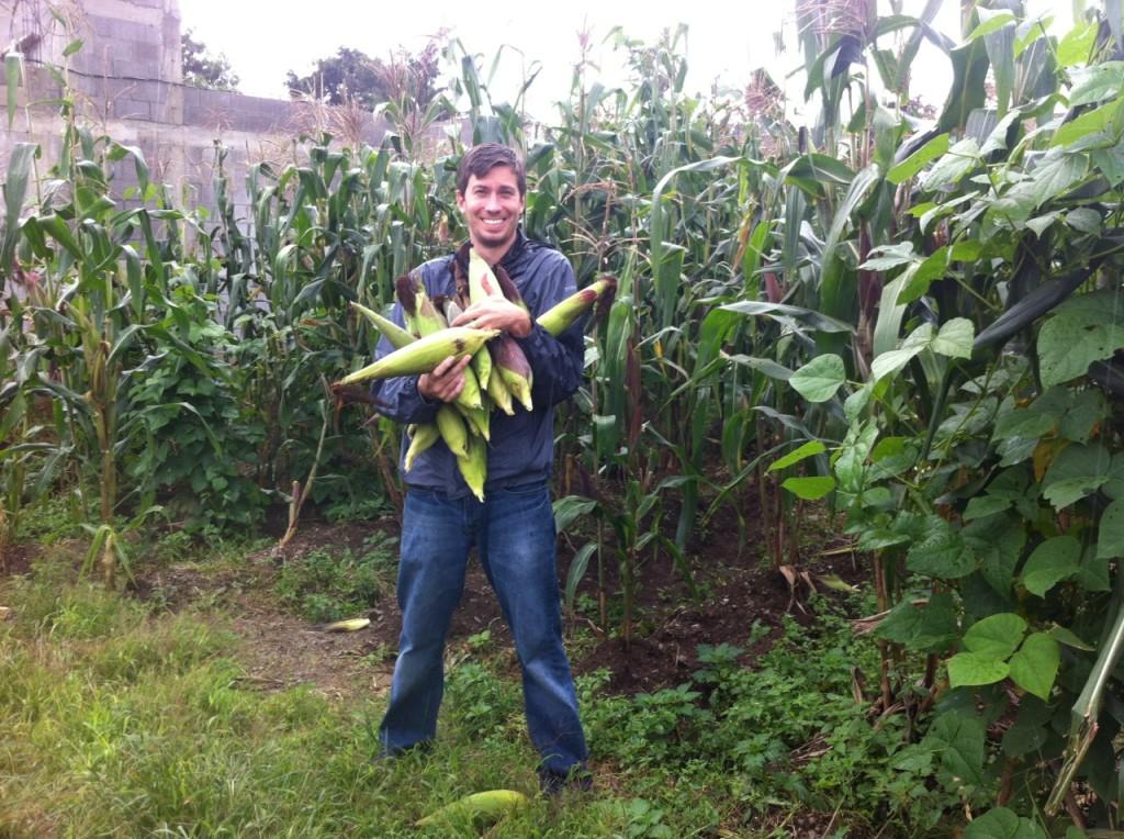 corn_harvest_2